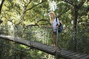 Мост из пробкового дерева